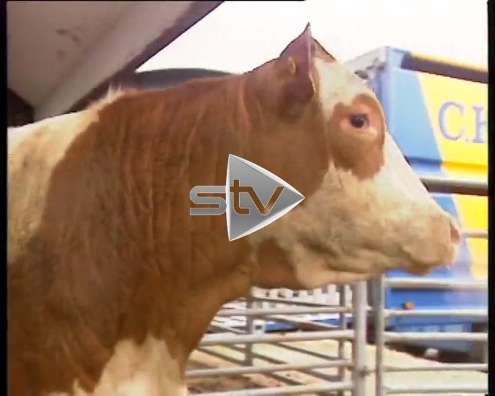 BSE Beef Crisis