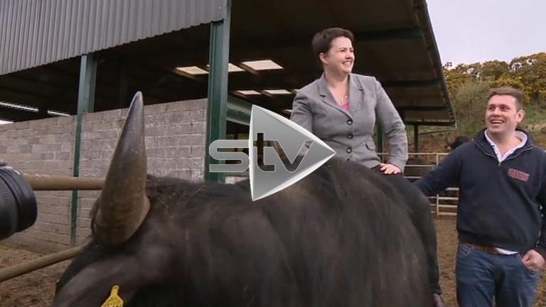 Davidson Rides the Bull
