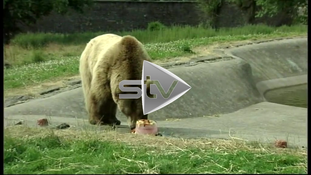 An Ice Lolly for a Bear