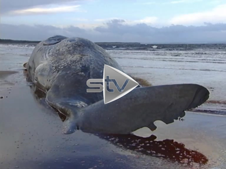 Whale Washed Up On Beach