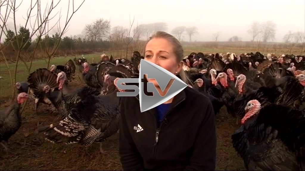Outtakes – Reporter Drowned Out by Noisy Turkeys