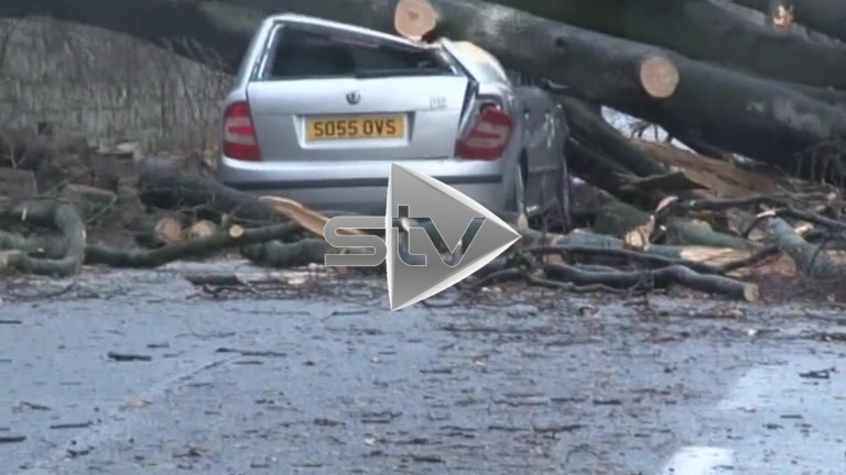 Car Crushed by Fallen Tree